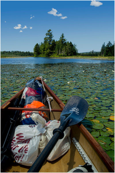 Adirondacks Round Lake Whitney Wilderness Lilypads 6 July 2016