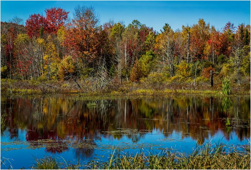 Adirondacks Chestertown October 2015 Wetlands Above Exit 25 4