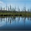 Adirondacks Forked Lake Wetlands Shoreline 3 July 2017