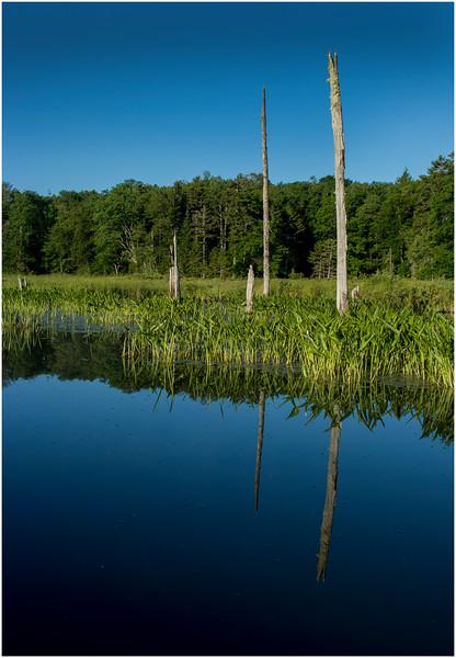 Adirondacks Moose River 8 July 2016