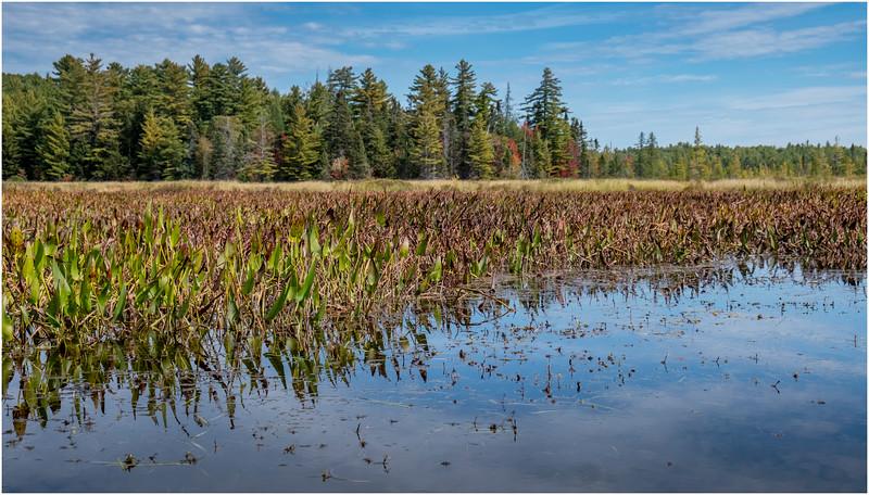Adirondacks Bog River Hitchins Pond 17 September 2019