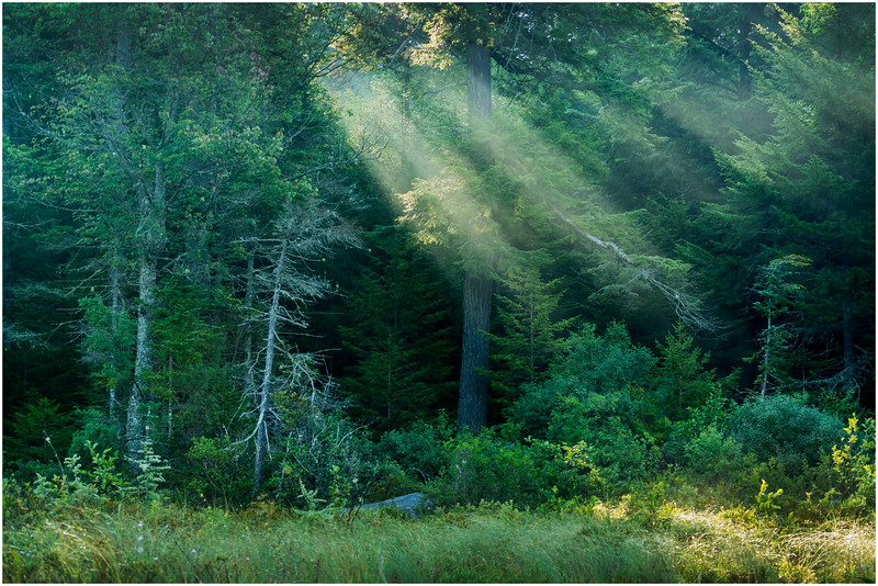 Adirondacks Forked Lake Morning Light 5 August 2016