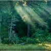 Adirondacks Forked Lake Morning Light 5 August 2016