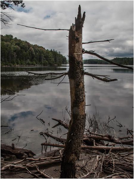 Adirondacks Moose River Recreation Area Squaw Lake with Dead Tree 2012