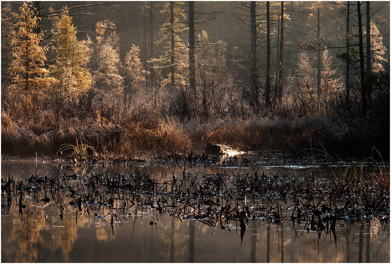 Adirondacks Bog River October 2011 Fall Foliage and Reflection and Shoreline Swampshore