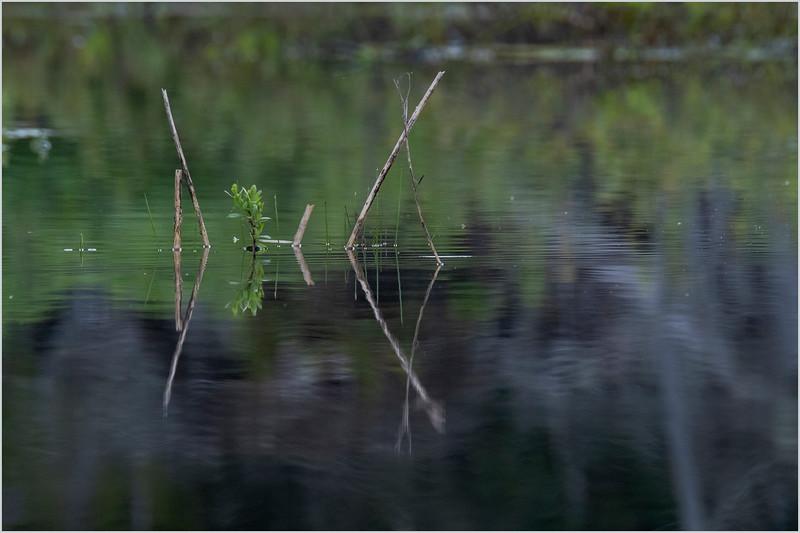 Adirondacks Lake Harris 1 June 2019