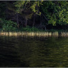 Adirondacks Rollins Pond Shoreline 1 July 2019