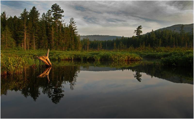 Adirondacks Forked Lake June 2010 Swamp Morning 3