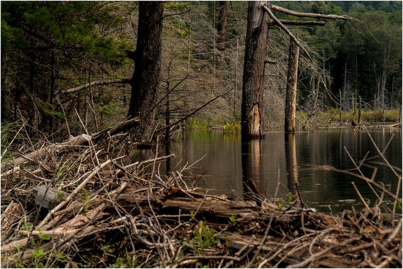 Adirondacks Sargent Pond Beaver Vlei July 2012