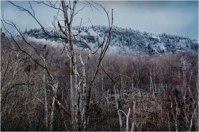 Adirondacks Keene November 2015 Cascade Pass Trees 1