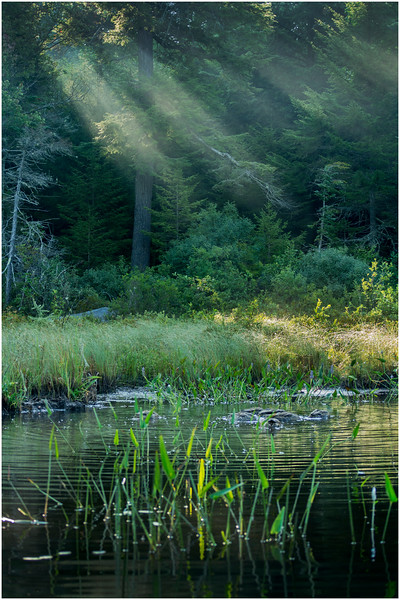 Adirondacks Forked Lake Morning Light 6 August 2016