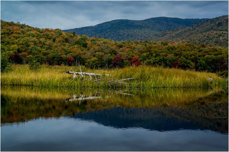 Adirondacks Cedar River Flow September 2015  Shoreline 17