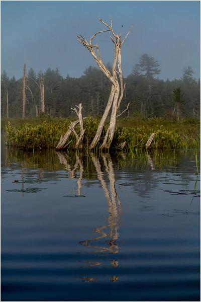 Adirondacks Forked Lake July 2015 Morning Mist Emerging Swamp Shore 4