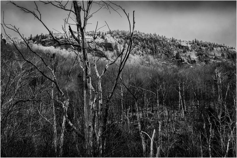 Adirondacks Keene November 2015 Cascade Pass Trees 1 BW