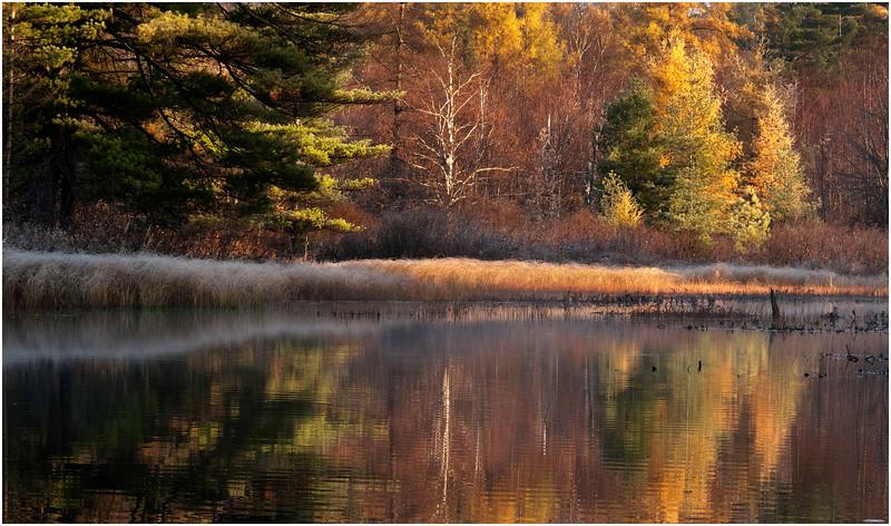 Adirondacks Bog River October 2011 Fall Foliage and Reflection and Shoreline