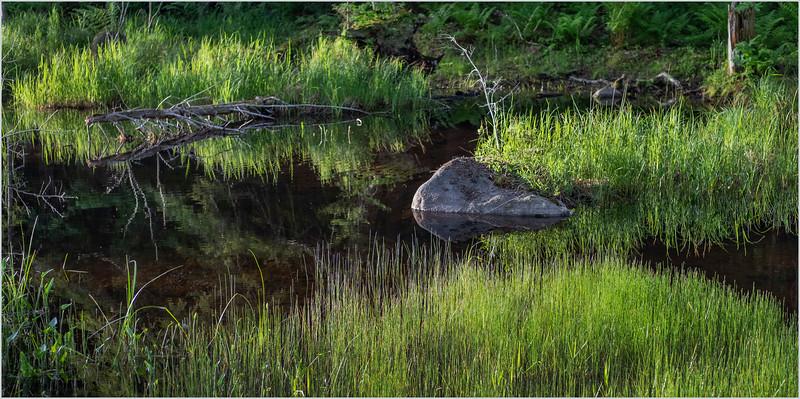 Adirondacks Cary Pond 7 June 2019
