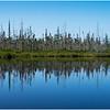 Adirondacks Forked Lake Wetlands Shoreline 1 July 2017