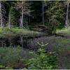 Adirondacks Cary Pond 17 June 2019