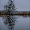 Adirondacks Essex Chain 3rd Lake to 4th Lake Passage Tree October 2013