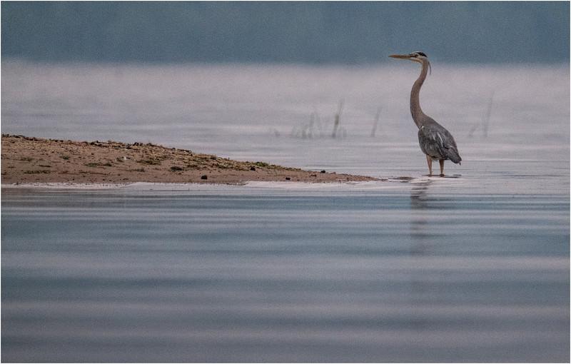 Adirondacks Chateaugay Lake Heron 1 July 2018