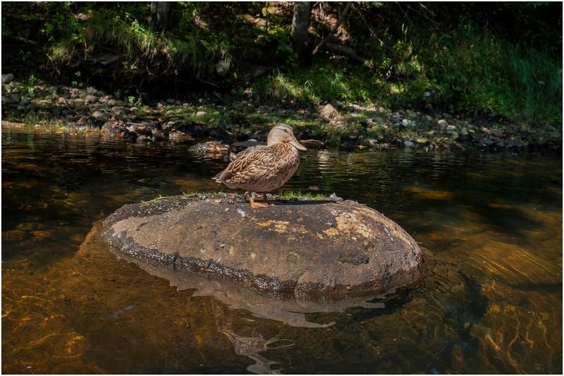 Adirondacks Moose River 12 September 2019
