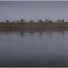 Adirondacks Chateaugay Lake Gulls on the Sandbar 1 July 2016