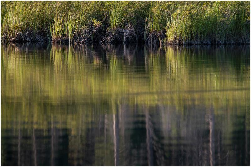 Adirondacks Forked Lake Wetlands Shoreline 5 July 2017