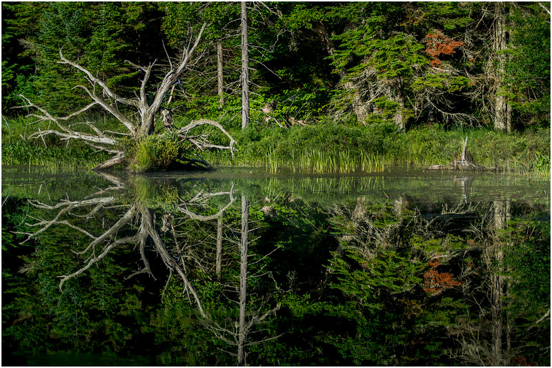 Adirondacks Moose River Shore 15 July 2016
