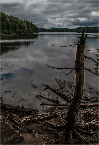 Adirondacks Moose River Recreation Area Squaw Lake with Dead Tree  July 2012