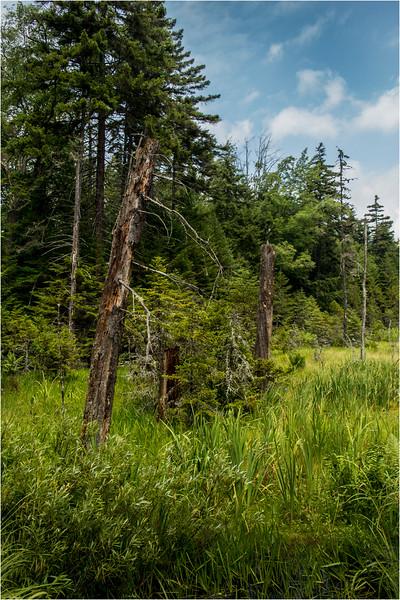 Adirondacks July 2015 Oneil Flow Road Clearing 1