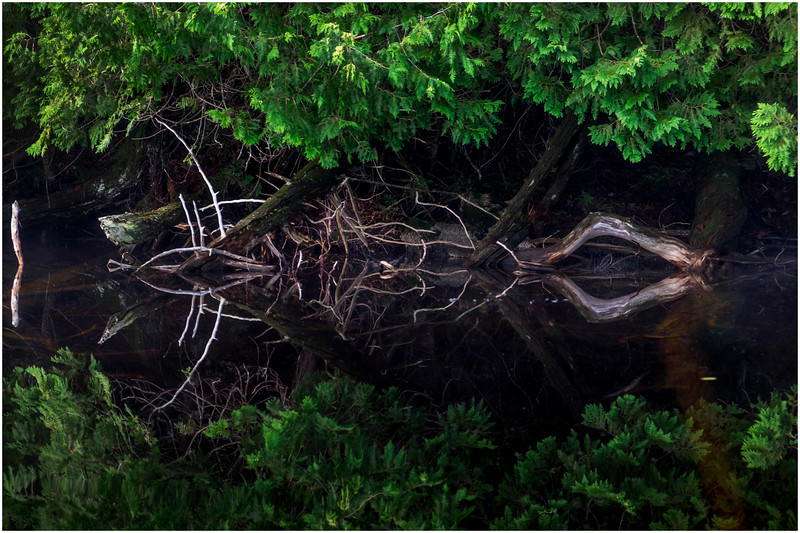 Adirondacks Newcomb Lake Shore Detail 33 July 2017