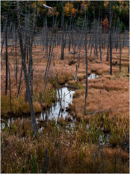 Adirondacks Saranac Wetlands from Rt  3 3 October 2009