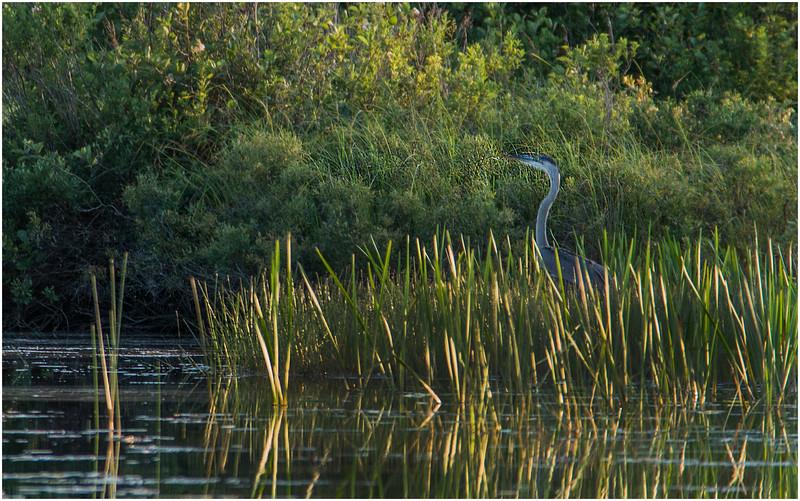 Adirondacks Forked Lake Wetlands Shoreline 13 July 2017