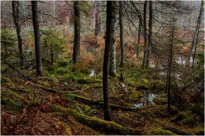 Adirondacks Essex Chain Fourth Lake Woods to Swamp 2 October 2013
