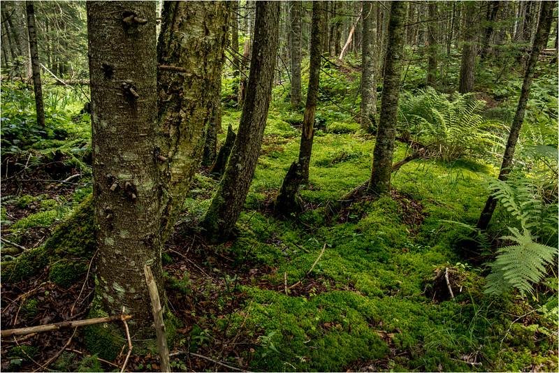 Adirondacks July 2015 Grassy Pond Trail Woods 1