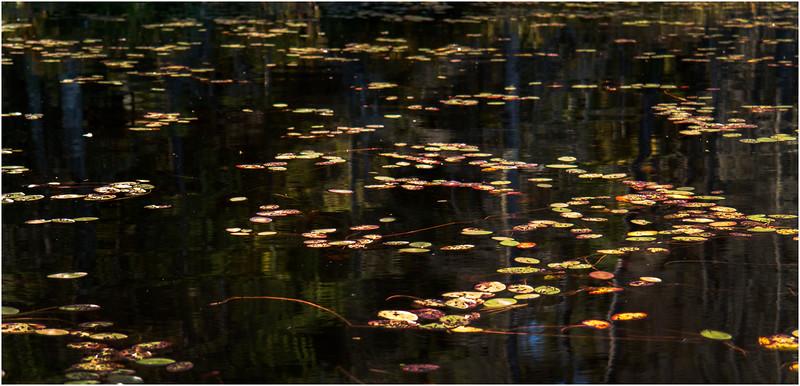 Adirondacks Moose River Recreation Area Helldiver Pond Lilypads 6 September 2012