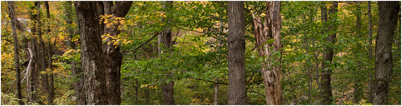 Adirondacks Hadley Mountain Slice of Forest 4 September 2010