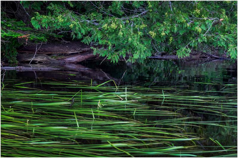 Adirondacks Newcomb Lake Shore Detail 23 July 2017