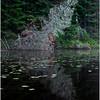 Adirondacks Newcomb Lake Shore Detail 19 July 2017