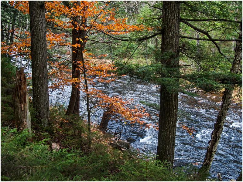 Adirondacks Marion River Along Carry 2 October 2009