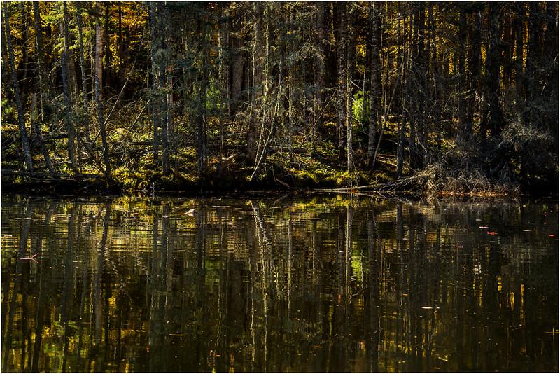 Adirondacks Lake Abanakee October 2015 Shoreline 12