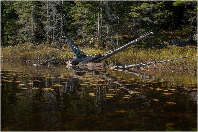 Adirondacks Forked Lake Paddle 11 October 2019