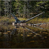 Adirondacks Forked Lake Paddle 11 October 2019
