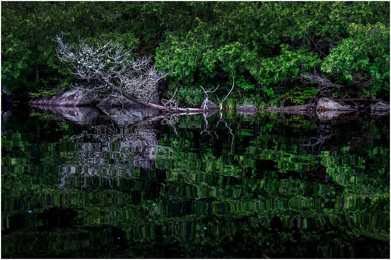 Adirondacks Newcomb Lake Shore Detail 9 July 2017