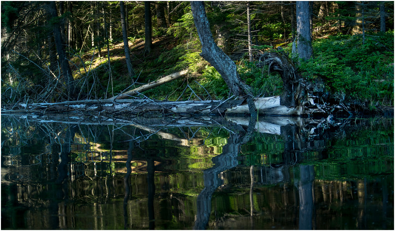 Adirondacks Moose River Shore 20 July 2016