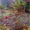 Adirondacks Cary Lake Morning Mist 25 September 2017