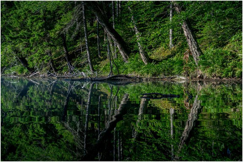 Adirondacks Moose River Shore 24 July 2016