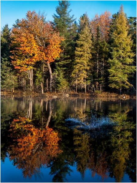 Adirondacks Utowana Lake Morning with Colors Shoreline Vertical October 2009