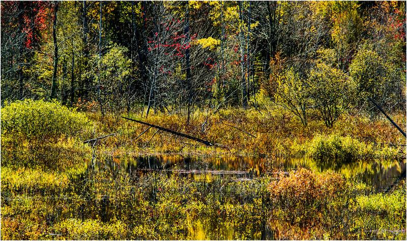 Adirondacks Chestertown October 2015 Wetlands Above Exit 25 8