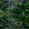 Adirondacks Moose River Shore 26 July 2016
